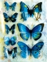 Stickers envol de papillons bleu/vert