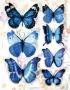 Stickers envol de papillons bleu/blanc