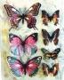Stickers envol de papillons roses