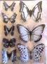 Stickers envol de papillons noir/blanc