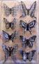Stickers envol de petits papillons noir blanc quadrillage vichy