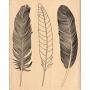 Tampon bois Florilèges Trois plumes